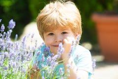 Счастливый мальчик лета Дети усмехаются Остатки на полях лаванды r Свежий нюх лаванды Предпосылка Lavandula стоковое изображение rf