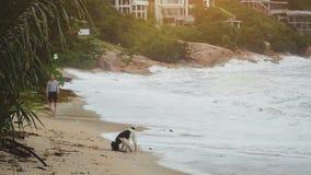 Счастливый молодой человек играя с собакой и ручкой на тропическом пляже в замедленном движении 1920x1080 видеоматериал