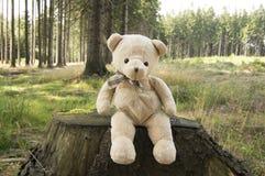 Счастливый плюшевый медвежонок сидя на strump дерева в лесе Стоковая Фотография