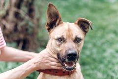 Счастливый портрет собаки, женское предприниматель играя с собакой и petting он стоковая фотография rf