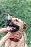 Счастливый портрет собаки, женское предприниматель играя с собакой и petting он стоковое изображение