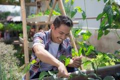 Счастливый садовничать мужчины стоковое фото rf