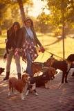 Счастливый ходок собаки девушек с собаками наслаждаясь в смешной идти стоковые изображения rf