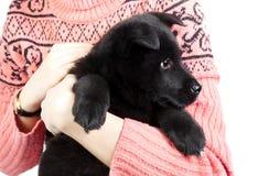 Счастливый щенок немецкой овчарки в оружиях девушки в swea Стоковое Фото