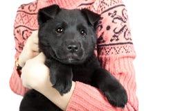 Счастливый щенок немецкой овчарки в оружиях девушки в swea Стоковая Фотография RF