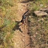 счастливый hiker Стоковое Фото