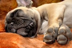 Счастье спать Стоковое фото RF
