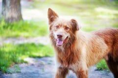 Счастливая бездомная собака Стоковые Изображения RF