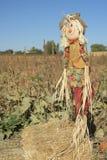 Счастливая ворона устрашения девушки на ферме Айдахо Стоковое Изображение