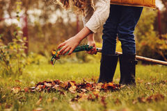Счастливая девушка ребенка играя маленький садовника в осени и выбирая выходит в корзину Стоковое фото RF