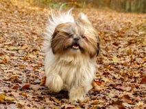 Счастливая, идущая собака стоковые изображения rf