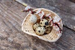 Счастливая пасха с цветками и яичками триперсток Стоковые Фото