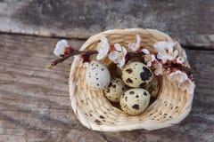 Счастливая пасха с цветками и яичками триперсток Стоковая Фотография