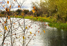 Счастливая прогулка прудом Стоковое Фото