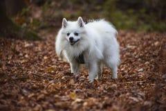 Счастливая собака в лесе Стоковые Фотографии RF