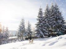 Счастливая собака в снеге Стоковое фото RF