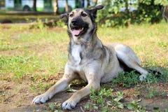 Счастливая собака лежит на траве Стоковые Фото