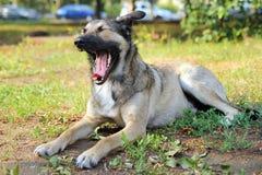 Счастливая собака лежит на траве Стоковое Изображение
