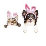 Счастливая собака и кошка пасхи над белым знаменем Стоковое Изображение RF