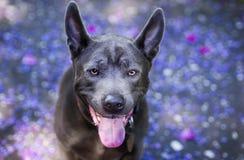 Счастливая собака наблюдая в камеру стоковое изображение