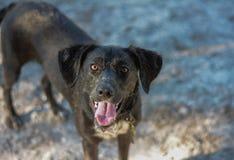 Счастливая собака на парке Стоковая Фотография