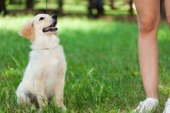 Счастливая собака смотря вверх стоковые изображения