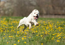 Счастливая собака Стоковое фото RF