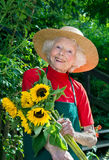 Счастливая старшая рудоразборка дамы цветет в ее саде Стоковые Изображения RF