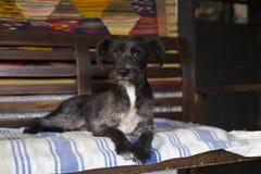Счастливая черная собака Стоковые Фото