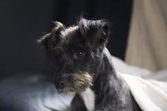 Счастливая черная собака Стоковые Фотографии RF