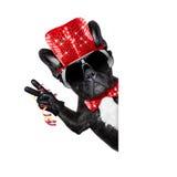 Счастливое celberation собаки Нового Года Стоковые Фото