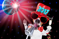 Счастливое celberation собаки Нового Года стоковая фотография rf