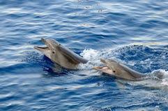 Счастливые дельфины в воде Стоковые Изображения RF
