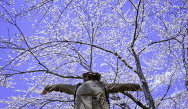 Счастливые женщины действия под цветком Сакуры цветения Стоковое Изображение RF
