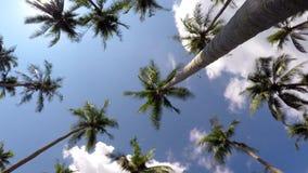Счастливые жизнерадостные каникулы и перемещение в тропическом сток-видео