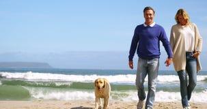 Счастливые зрелые пары идя с собакой на пляже акции видеоматериалы