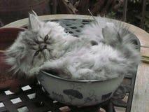 Счастливые котята Стоковые Изображения