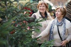 Счастливые пожилые женщины выбирая спрус Стоковые Изображения RF
