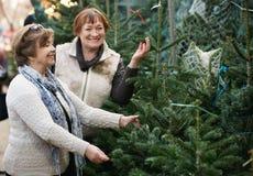 Счастливые положительные пожилые женщины выбирая спрус Стоковое Изображение RF