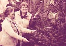 Счастливые положительные пожилые женщины выбирая спрус Стоковые Фото