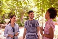 Счастливые друзья говоря шутки и смеяться над Стоковая Фотография