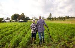 Счастливые старшие пары на ферме лета стоковые изображения