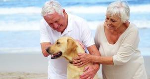 Счастливые старшие пары petting их собака на пляже акции видеоматериалы