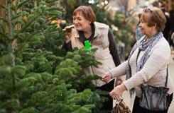 Счастливые усмехаясь зрелые женщины выбирая спрус Стоковые Фотографии RF