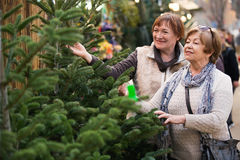 Счастливые удовлетворенные пожилые женщины выбирая спрус стоковая фотография