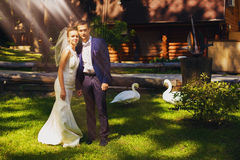 Счастливые groom и невеста с лебедями стоковая фотография rf