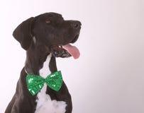 Счастливый датчанин St Patricks Стоковое Изображение