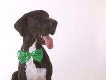 Счастливый датчанин St Patricks Стоковые Фото