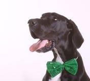 Счастливый датчанин St Patricks Стоковое фото RF