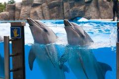 Счастливый дельфин в dolphinarium под открытым морем Стоковое Изображение RF
